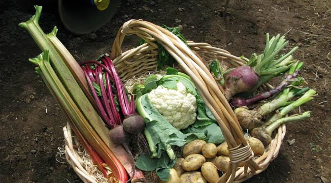 DIETA ANTI CANCRO – La salute nel piatto – Mantenere il nostro corpo nelle migliori condizioni e prepararsi ad invecchiare bene