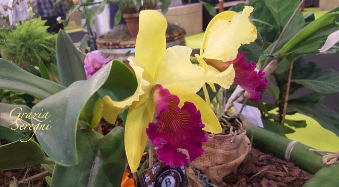 Orchidee e orchimania –  Nuove foto delle orchidee più rare di FLORMART