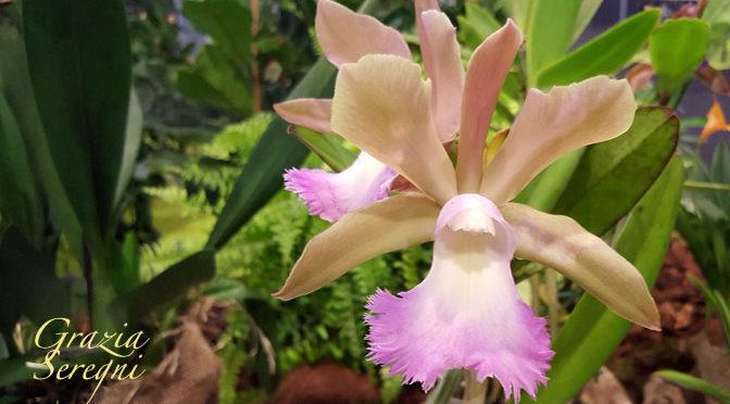 Altre foto di orchidee anche rare