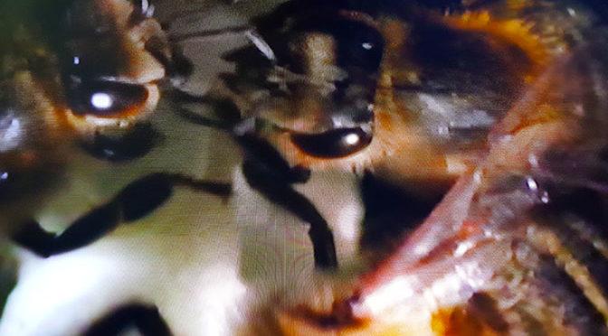 Buone notizie dall'Abruzzo – Le api  ritornano
