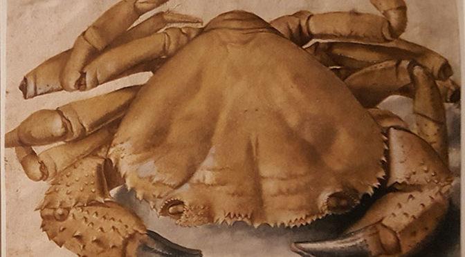 Arte a Milano – Imerdibile  Albrecht Dürer