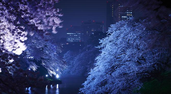 Evento imperdibile in Giappone – Tokyo – fioritura dei ciliegi
