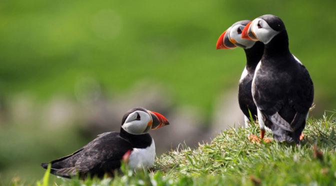 Vacanze 2018 – Natura e cultura alle Isole Faroe – al fresco !